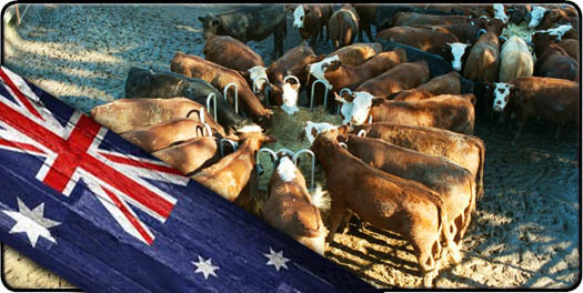 Australian made feed systems
